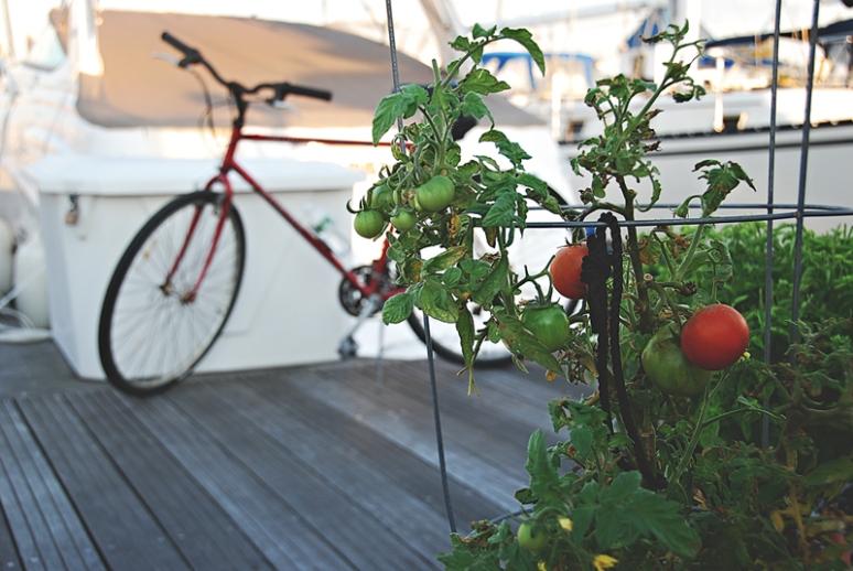Scarlett-Hernandez-_-tomatoes