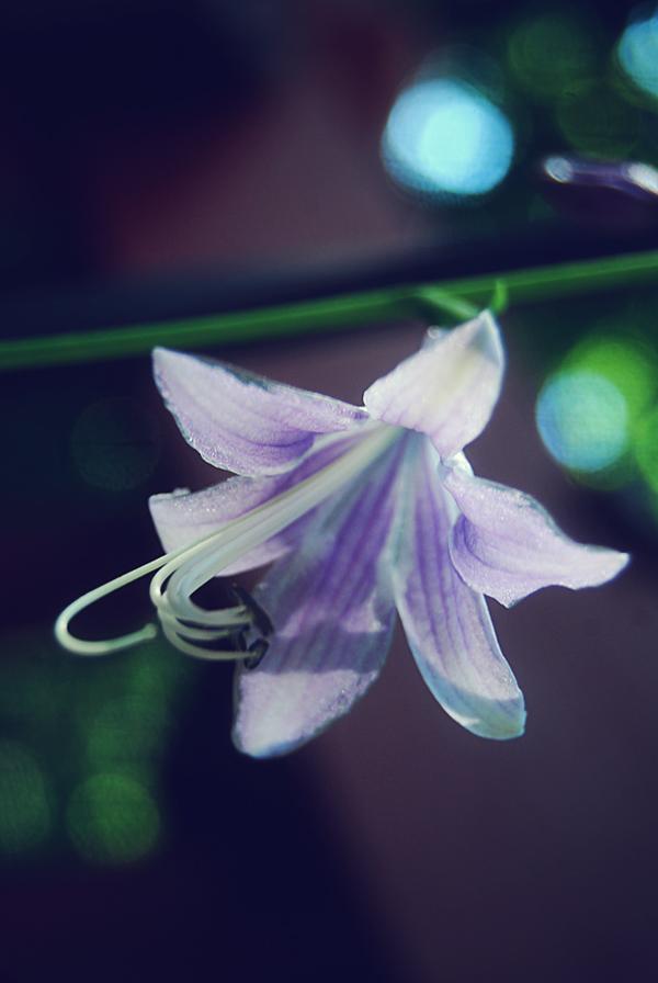 Scarlett-Hernandez_purple
