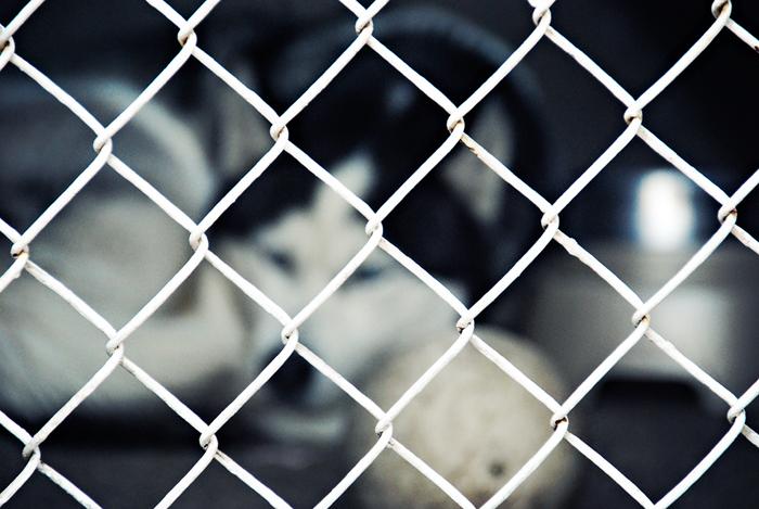 Scarlett-Hernandez_-fenceddog