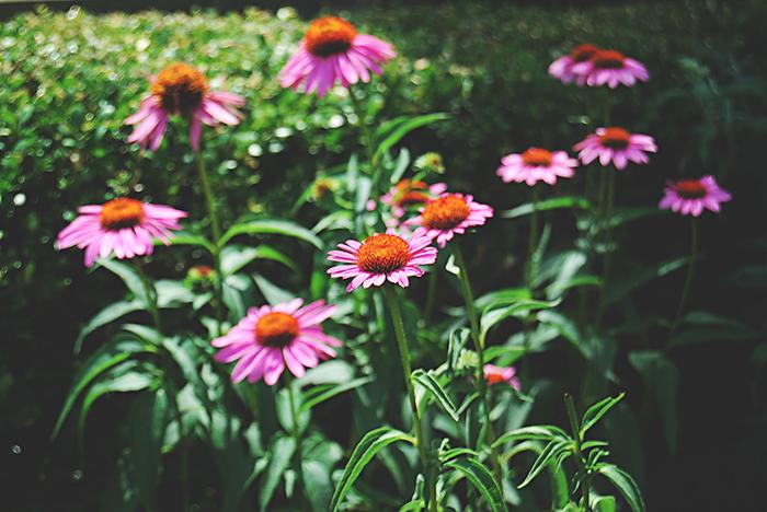 Springcolor-_Scarlett-Hernandez